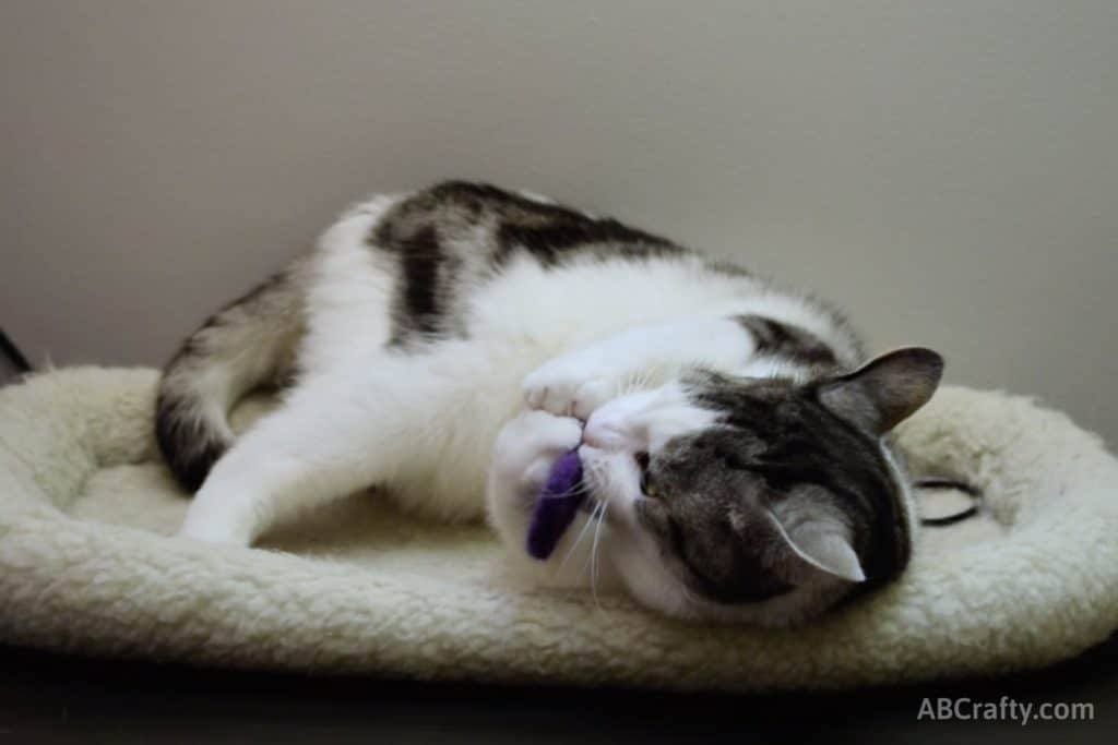 Domestic shorthair cat named Rufio playing with purple DIY catnip toy made of felted wool