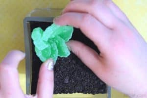 placing an edible succulent made of candy into a glass container filled with crush oreos that look like dirt